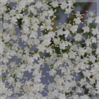 blog_100509_01.jpg